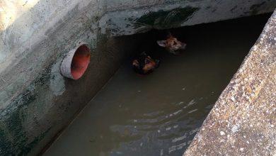 Photo of Los bomberos rescatan a dos perros de una acequia de Nonduermas