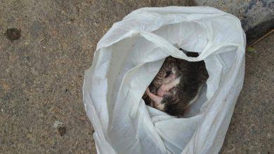 Photo of La Policía rescata de la basura una camada de gatos que abandonaron en una bolsa atada