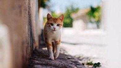 Photo of El Ayuntamiento busca voluntarios para atender las colonias felinas de la calle