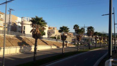 Photo of Ciudadanos reclama el arreglo del arbolado urbano, que considera muy descuidado