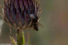 2021-07-02-Insectos-cardo-3