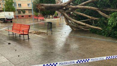 Photo of El vendaval tumba un árbol de la plaza Cayitas sin provocar otros daños
