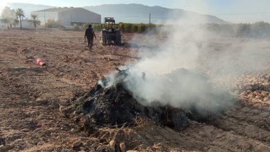 Photo of Nuevas denuncias por quema de podas agrícolas en Sangonera la Seca