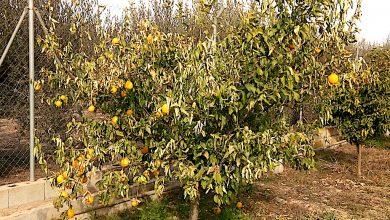 Photo of Tras Filomena y Hortensia… la primavera de enero, con casi 30 grados