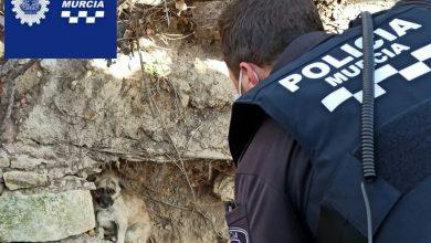 Photo of Policía Local y Zoonosis rescatan a un perro atrapado en una acequia en San Ginés
