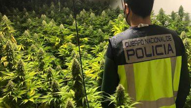 Photo of Detienen a tres personas que tenían un cultivo de marihuana en un piso de Alcantarilla
