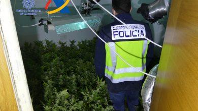 Photo of La Policía descubre una plantación de marihuana en el interior de un piso de Alcantarilla