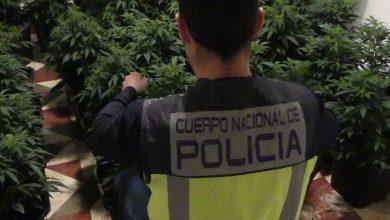 Photo of La Policía Nacional desmantela la enésima plantación de marihuana en un piso de Alcantarilla