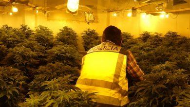 Photo of Macrooperación policial en dos edificios de Alcantarilla ocupados y dedicados al cultivo de marihuana