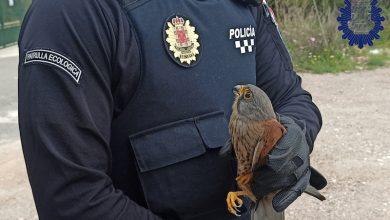 Photo of La Policía recupera un cernícalo herido entre unos matorrales en Sangonera la Seca