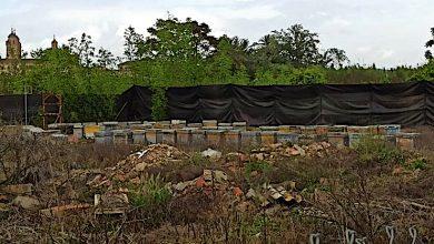 Photo of Sanción por instalar sin autorización 93 colmenas próximas a viviendas