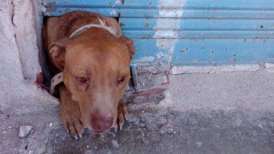 Photo of Rescatan un perro encerrado en un bajo abandonado e insalubre en Puebla de Soto