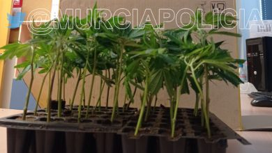 Photo of La Policía Local decomisa a un conductor en La Ñora 40 plantas de marihuana que llevaba en su coche
