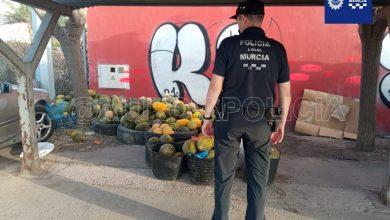 Photo of Decomisan más de dos toneladas de melones en el mercado de El Puntarrón por ser de dudosa procedencia