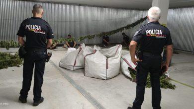 Photo of Detenidas 7 personas e incautados 200 kilos de marihuana en el sótano de un edificio de la calle Mayor