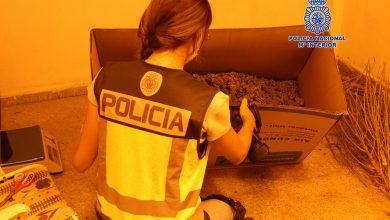 Photo of Ocho detenidos en una nueva redada en la que se han desmantelado otros cuatro narcopisos