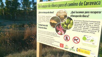Photo of ANSE prolongará otro año su proyecto de restauración del corredor fluvial de la Contraparada