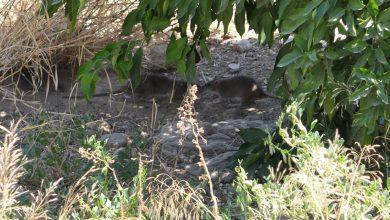 Photo of Detectan en solares junto al Samaniego veneno para ratas que es peligroso para los niños