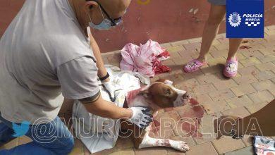 Photo of Detenido por apuñalar a un perro en la calle y amenazar con un machete a los policías